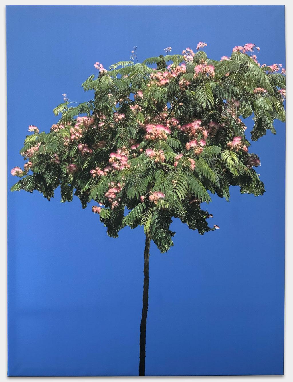 """Ruge, Nina, Fernsehmoderatorin, """"Seidenakazie"""", 120x160 cm, Fotografie auf Leinwand gedruckt, Keilrahmen, Inspiriert von ihrem Lieblingsbaum in Lucca"""